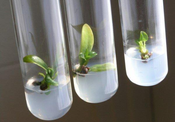 راه های صادرات پایدار محصولات زیستی شناسایی می گردد