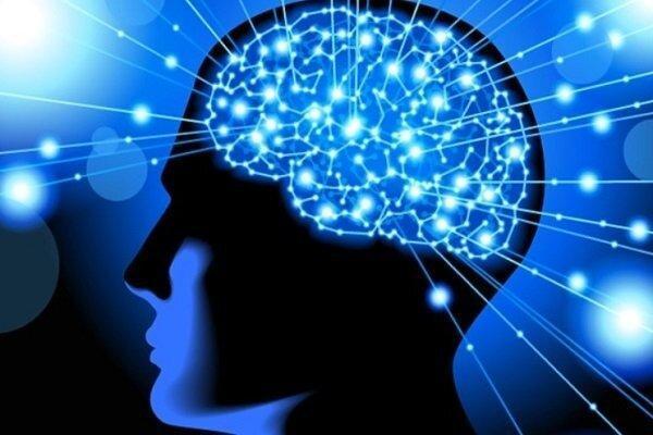 دوره بین المللی آموزش جامع علوم اعصاب شناختی برگزار می گردد