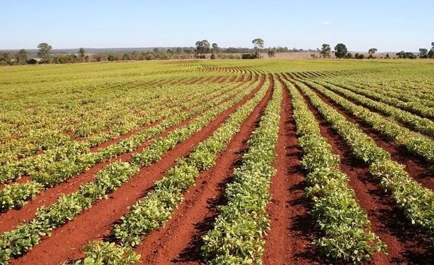 راه اندازی شهرک استارت آپی کشاورزی