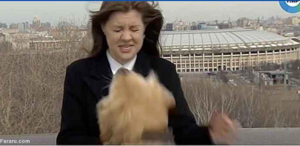 (ویدئو) یک سگ میکروفون خبرنگار را هنگام پخش زنده ربود!