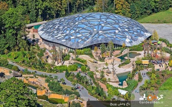 باغ وحش زوریخ؛ فرصتی برای تماشای حیوانات خاص و زیبا