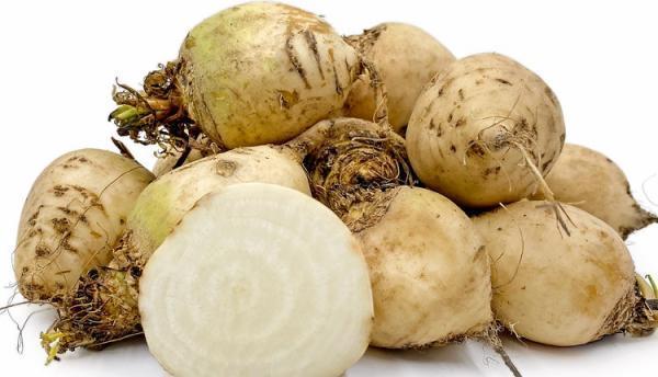 خواص چغندر سفید (قند) و برگ آن، از نظر طب سنتی و مدرن