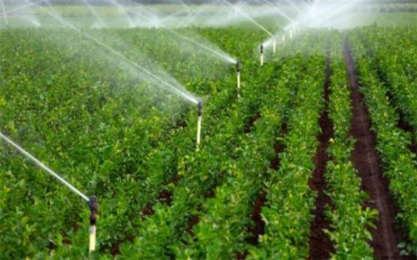 جزییات طرح امنیت غذایی به روایت عضو هیات رئیسه کمیسیون کشاورزی